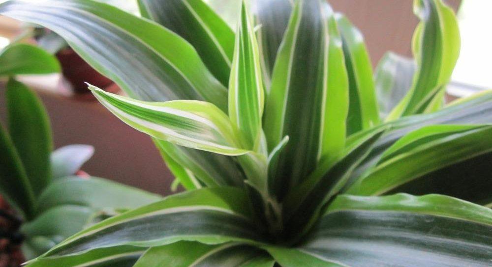 Plantas de interior para decorar tu vivienda